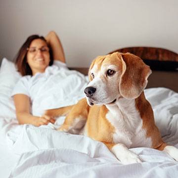 Are pets allowed at Cambria Hotel Phoenix - North Scottsdale?